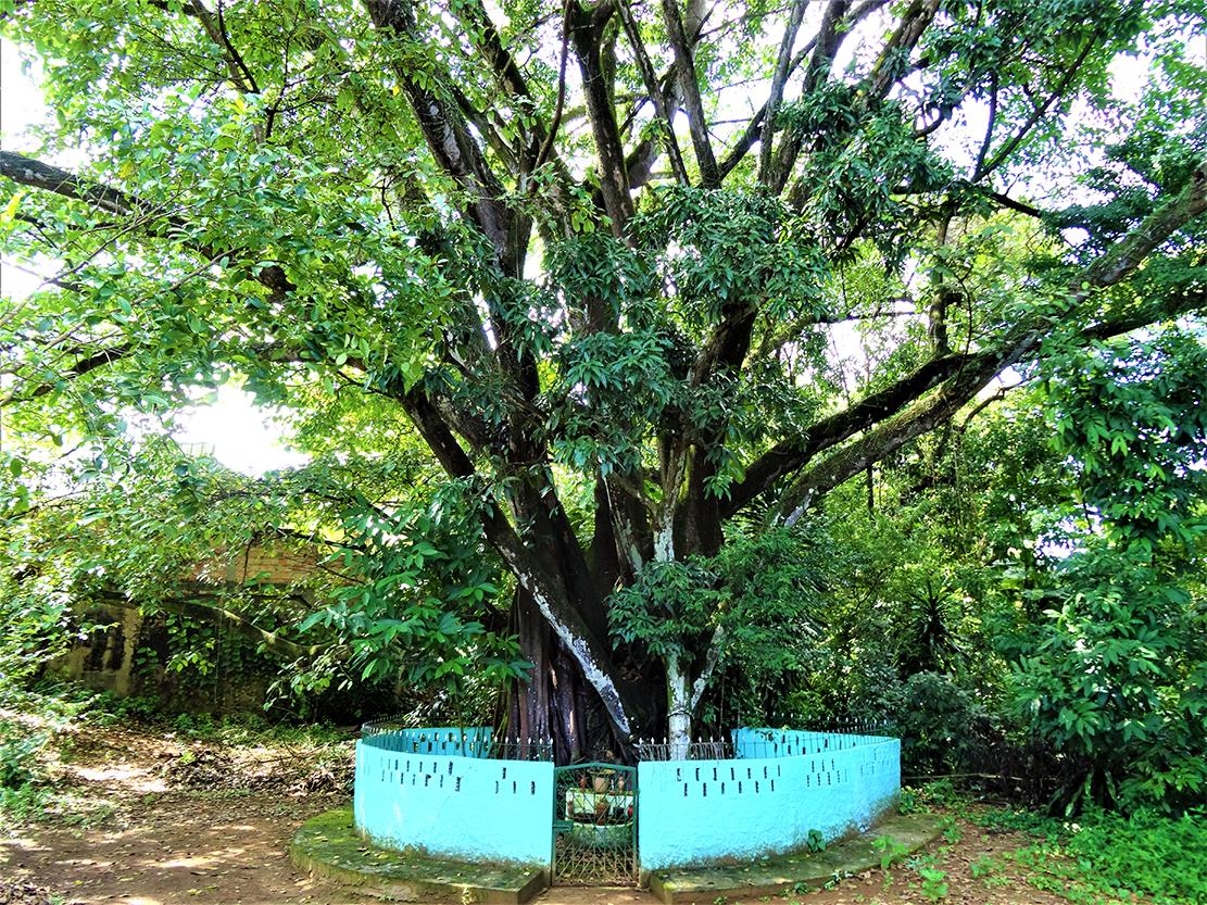A árvore que come